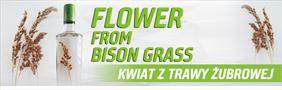 kwiaty trawy żubrowej