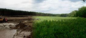 rekultywacja obszaru leśnego
