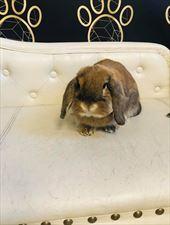 pielęgnacja królików