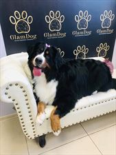 salon dla psów