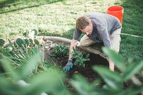 sadzanie roślin