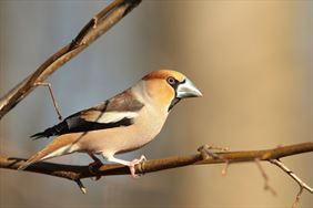monitoring ornitologiczny