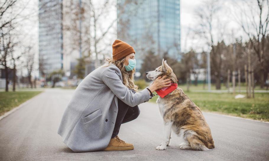 Koronawirus a zwierzęta – czy istnieje ryzyko zarażenia?