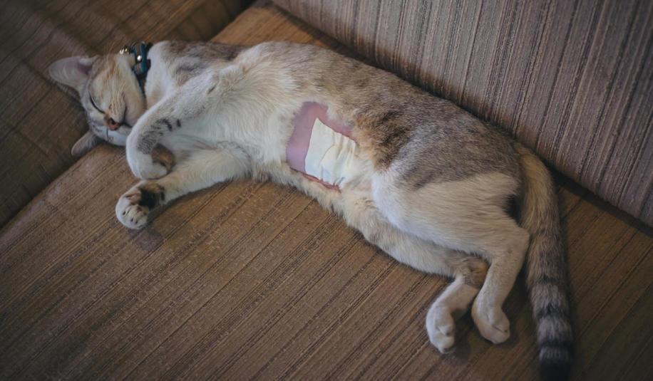 Na czym polega sterylizacja/kastracja zwierzęcia?