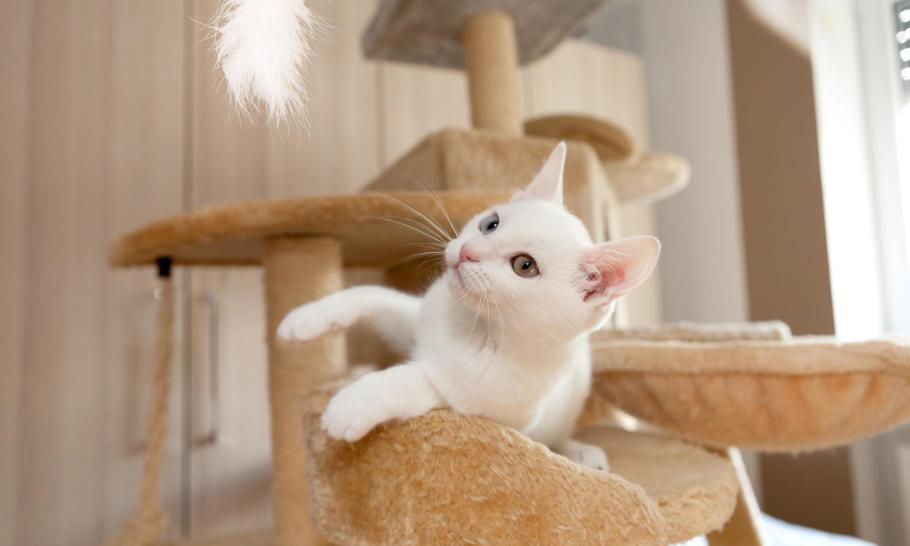 Jak zrobić drapak dla kota? Cechy i przygotowanie