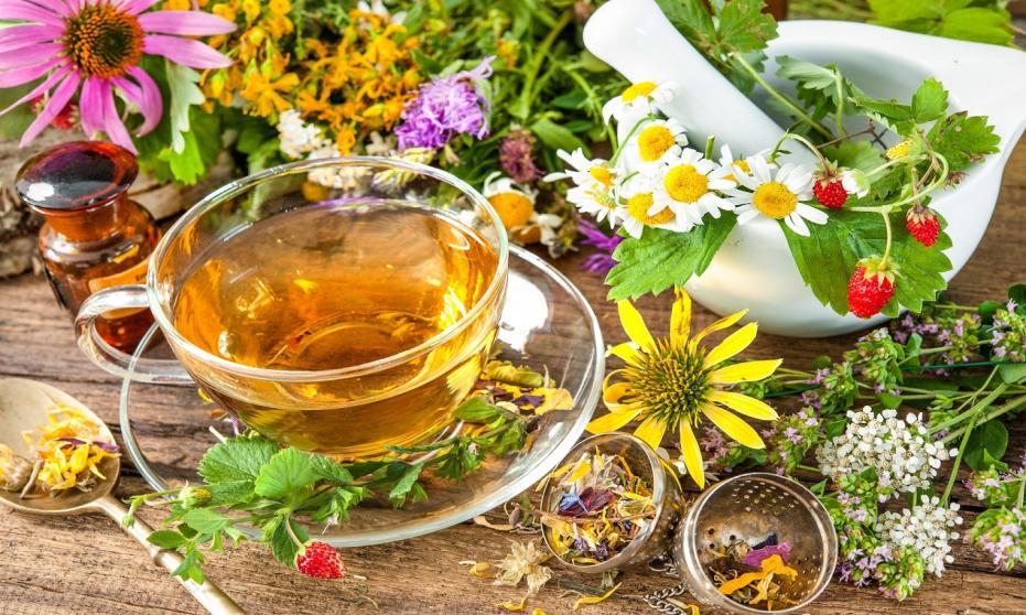 Zioła lecznicze stosowane w ziołolecznictwie