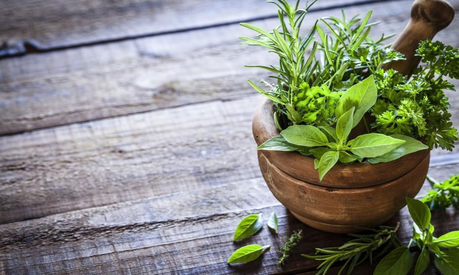Hyzop lekarski i koziołek lekarski – cenne, choć mało znane zioła