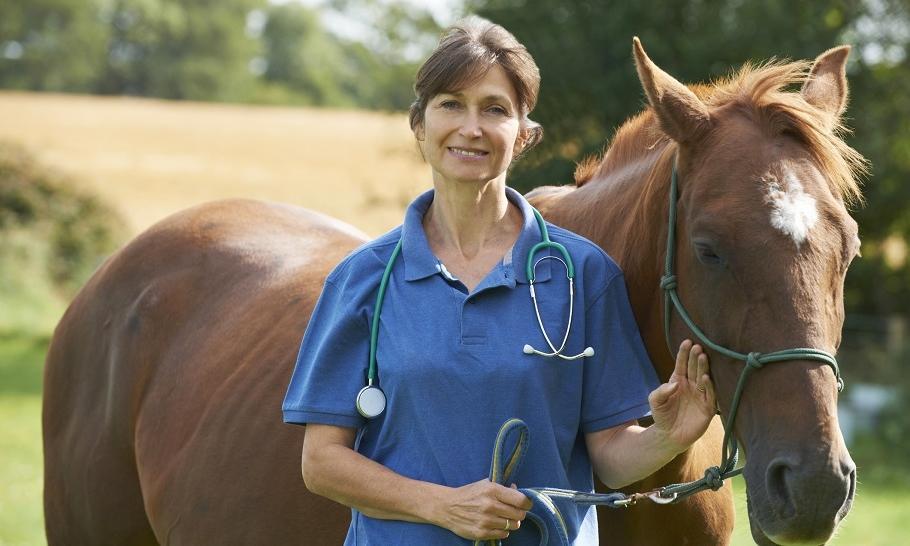 Mięśniochwat u konia - czym jest i jak zapobiegac?
