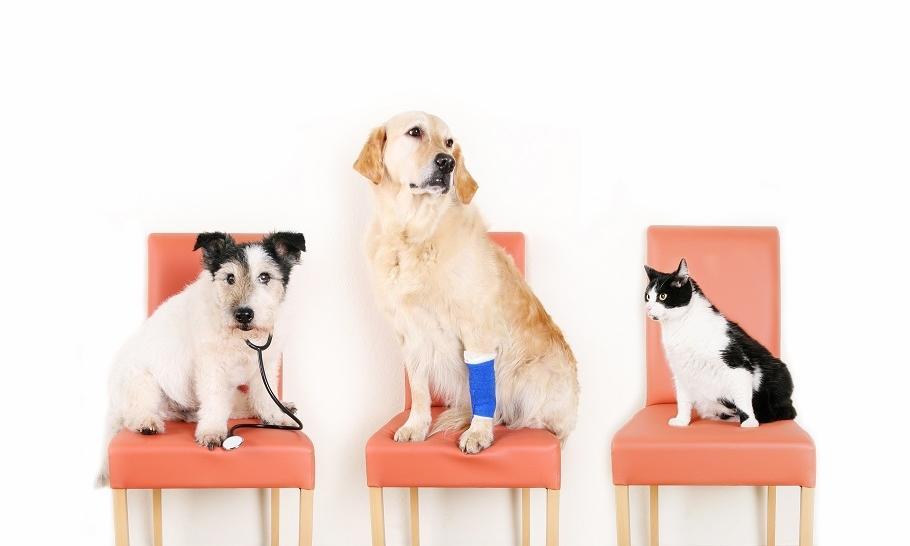 Jak dbać o zdrowie czworonoga? Podstawy profilaktyki zwierząt