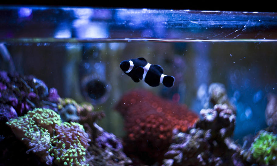 Jakie są gatunki ryb akwariowych