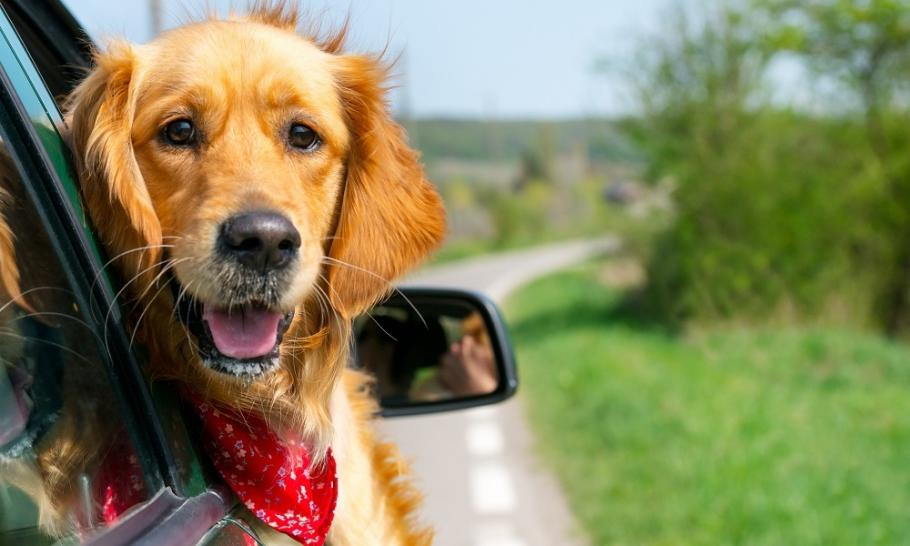 Jak przygotować zwierzę na wyjazd za granicę?