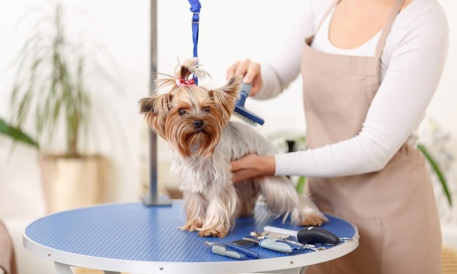 Rodzaje zabiegów pielęgnacyjnych dla psów