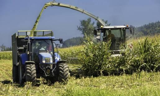 Rola sieczkarni w uprawie kukurydzy
