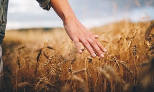 Odmiany zbóż jarych popularnych w Polsce