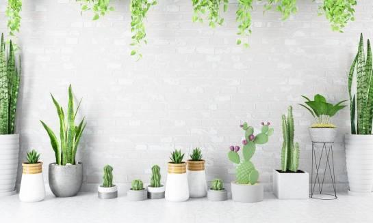 Jak dobrać doniczkę do kaktusa?