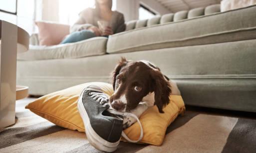 Jak oduczyć psa gryzienia? Poradnik