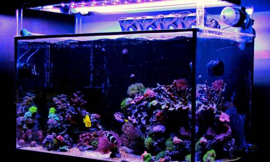 Jak wybrać najlepszą lampę do akwarium morskiego?