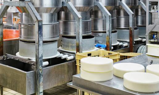 Szczepionki do sera mezofilne i termofilne. Czym się między sobą różnią?