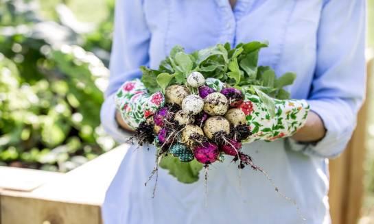 Samodzielna uprawa warzyw dla zdrowia