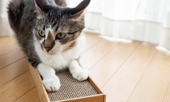 Ekologiczny tekturowy drapak dla kota
