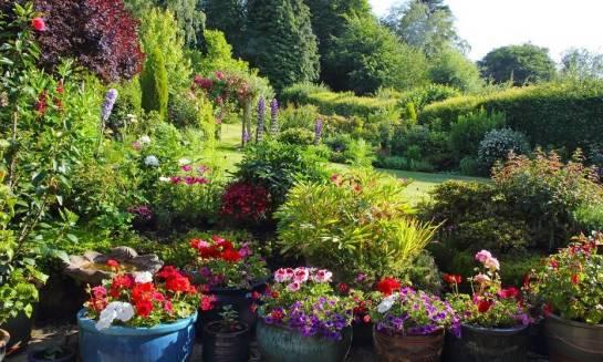 Które krzewy sprawdzają się idealnie jako ozdoba ogrodu?