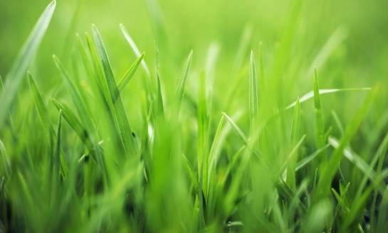 Wybieramy nasiona traw – praktyczne porady