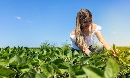 Zasady uprawy soi w Polsce - najlepsze nasiona i terminy siewu