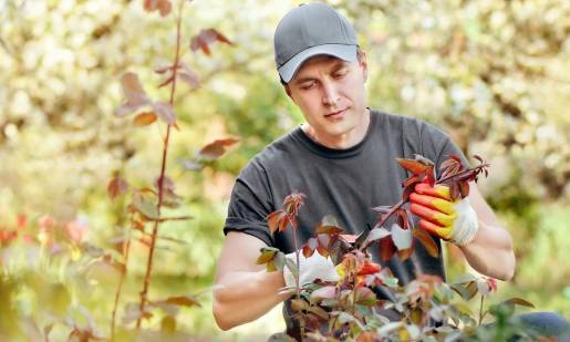 Czy firmy sprzątające osiedla zajmują się także pielęgnacją zieleni?