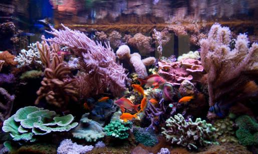 Parametry wody w akwarium morskim, które należy badać