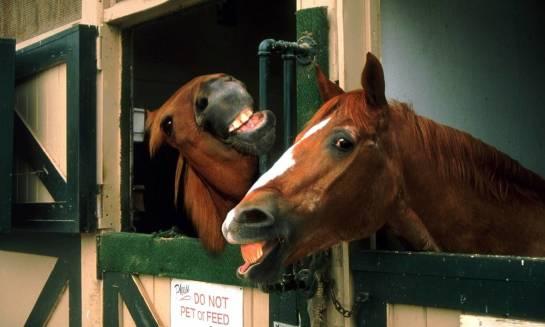 Ratowanie koni z rzeźni. Jak możemy wesprzeć ludzi o wielkim sercu?
