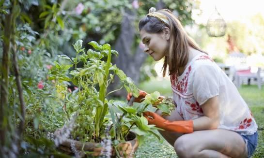 Artykuły niezbędne do pielęgnacji ogrodu