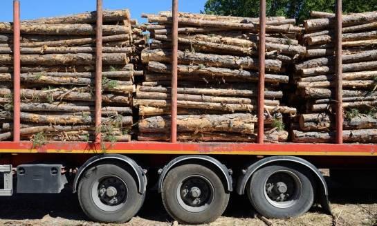 Jak prawidłowo transportować drewno z lasu?