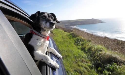 Gdzie wybrać się nad morze z psem?