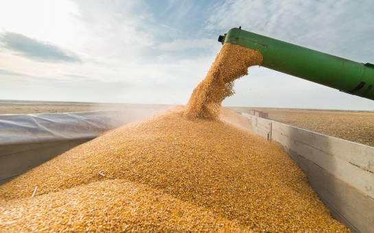 Technologia pakowania zielonek i kiszonki z kukurydzy w rękawach foliowych