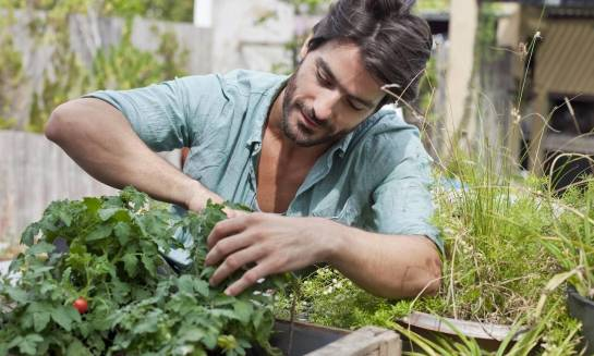 Na co możemy liczyć w ramach fachowej pielęgnacji ogrodów?