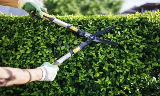 Fachowa pielęgnacja terenów zielonych od A do Z