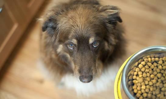 Na jakie składniki należy zwrócić uwagę wybierając suchą karmę dla psa?