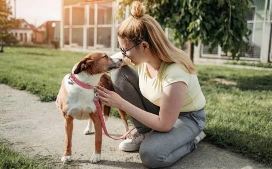 Jak postępować ze zwierzęciem z adopcji?