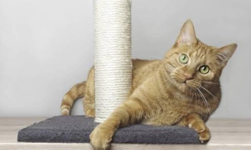 Dlaczego właściciel kota powinien mieć w domu drapak?