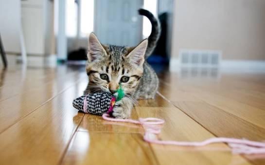 Akcesoria do aktywnej zabawy z kotem