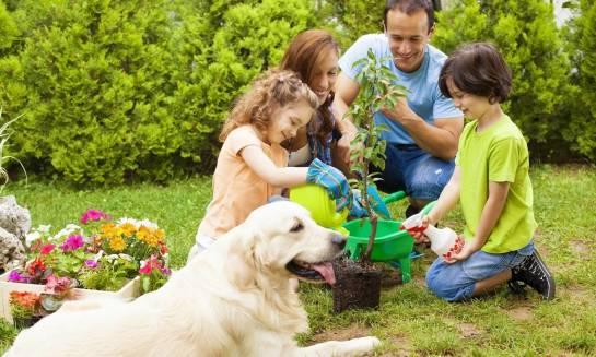 Czy rzeczywiście należy unikać pewnych roślin, mając zwierzęta?