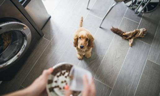 Czym lub jak karmić psa z alergią pokarmową?