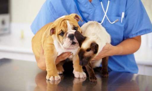 Dlaczego psy i koty należy poddawać sterylizacji?