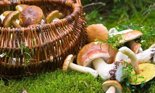 Jakie witaminy i składniki mineralne zawierają grzyby świeże, a jakie suszone?