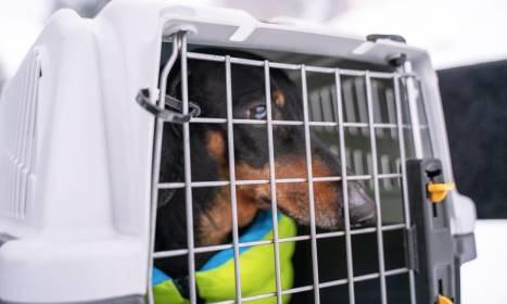 Czy wyjeżdżając busem do Anglii można zabrać ze sobą zwierzę?