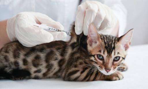 Szczepienia młodych psów i kotów. Dlaczego są tak ważne?