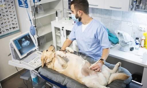 Na czym polega sterylizacja zwierząt?