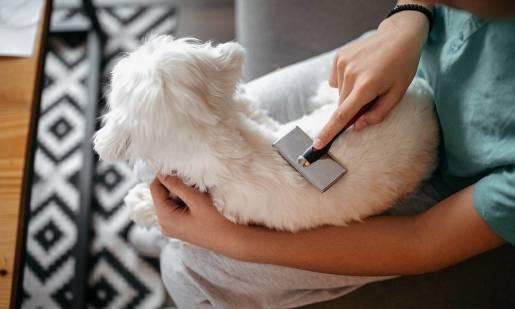 Jak prawidłowo czesać psa? Porady i wskazówki