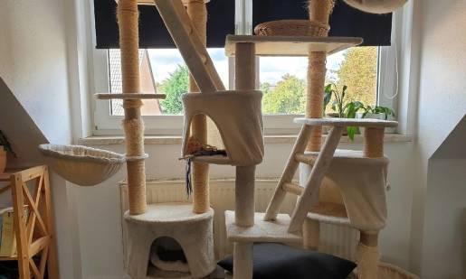 Drapaki dla kotów – w jakim miejscu je ustawić?