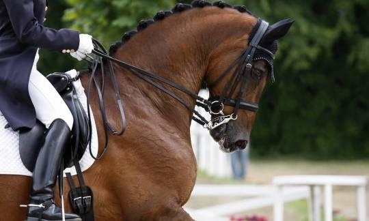 Ogłowie dla konia. Charakterystyka